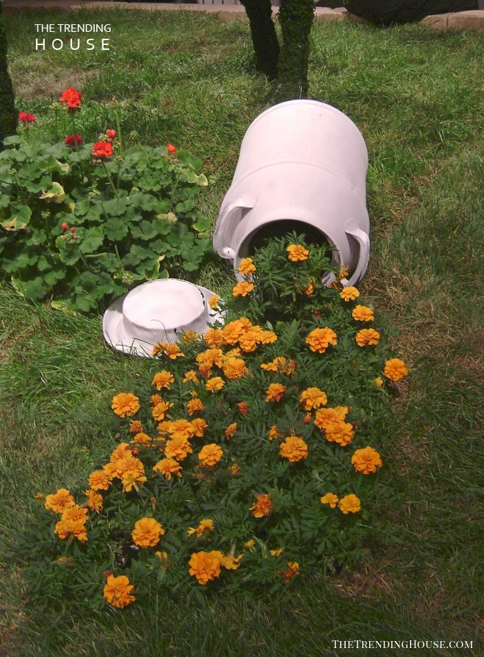 A Milk Can with Overflowing Marigolds