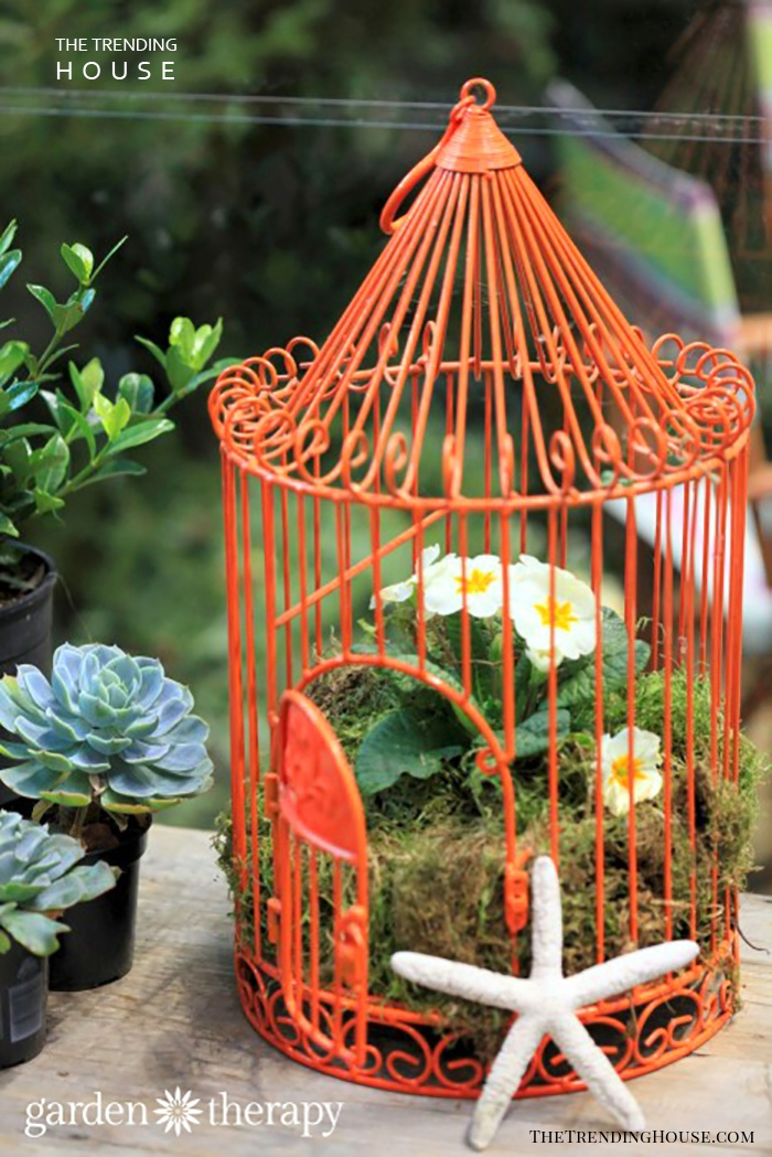 Make Your Birdcage Planter Stand Out
