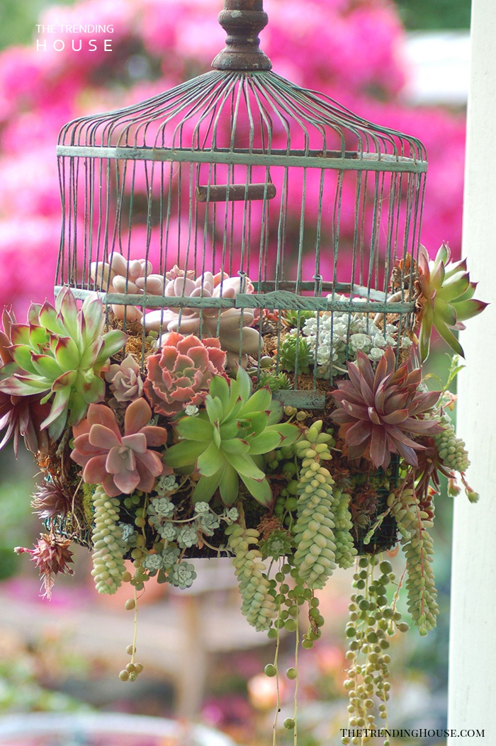 Low-key Birdcage Planter Design