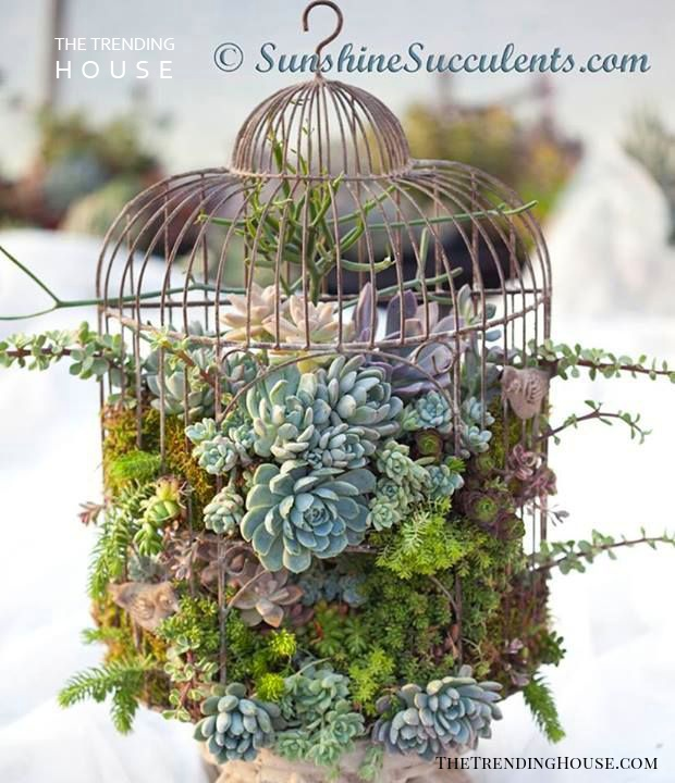 The Perfect Planter for Succulents