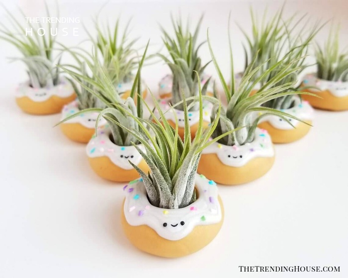"""""""Donut"""" Miss These Adorable Planters"""