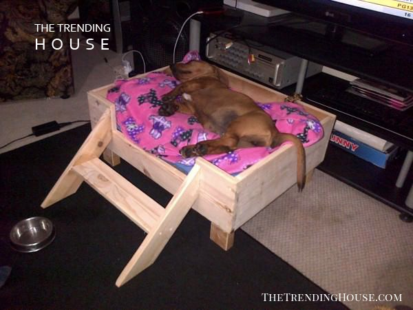 Easy to Build Raised Dog Bed with Step