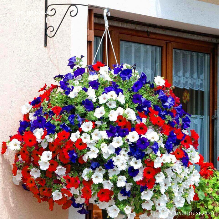 Fourth of July Themed Hanging Basket