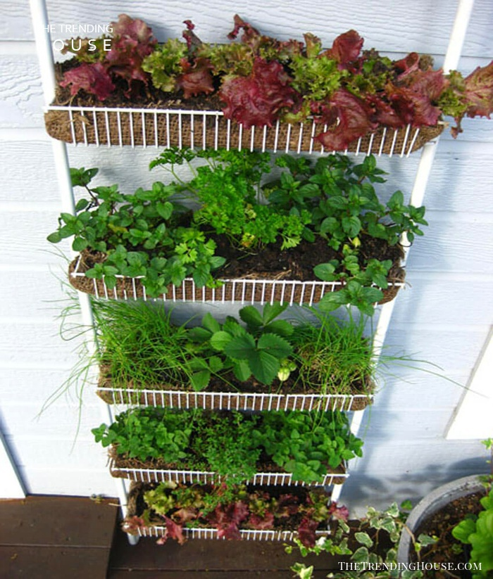 Hanging Vegetable Garden with Lettuce and Strawberries