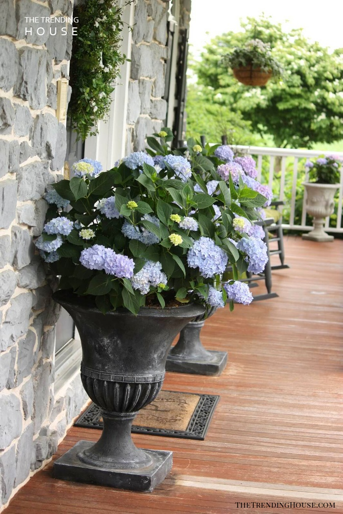 Large Footed Planters with Blooming Hydrangeas