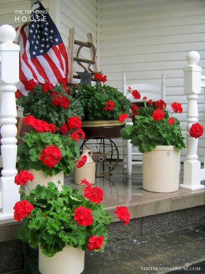 Patriotic Red Geraniums in Various Containers