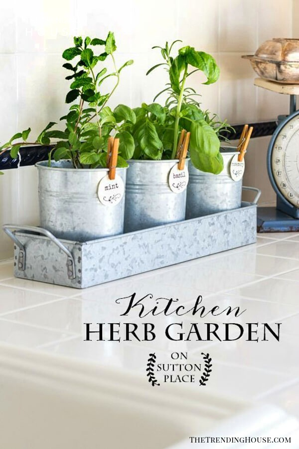 Pretty Little Pails Herb Garden