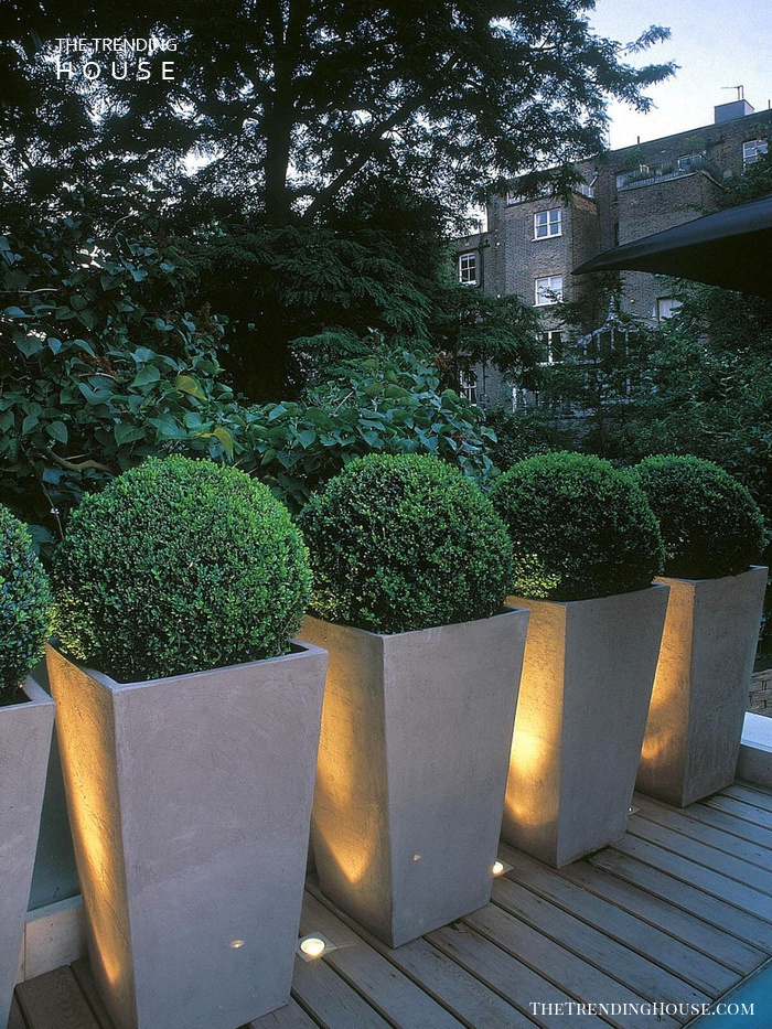 Small Uplights Between the Planters