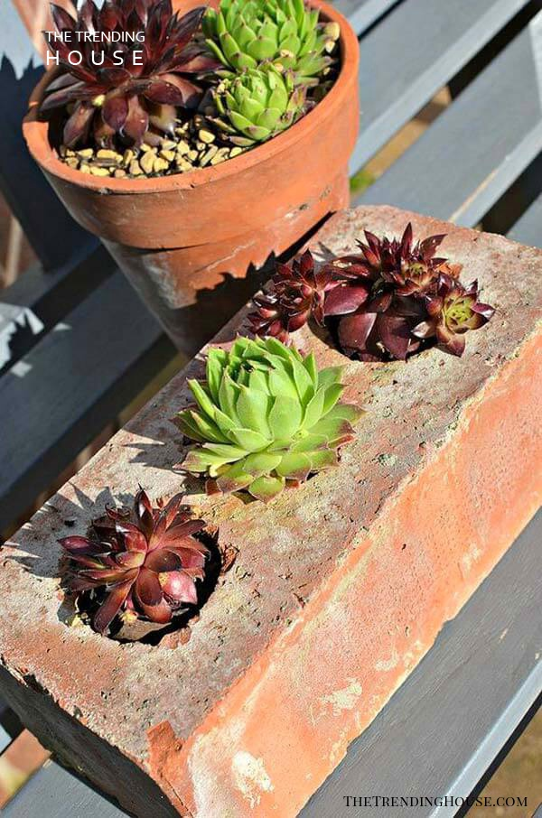 Think Outside the Box with Succulent Planters