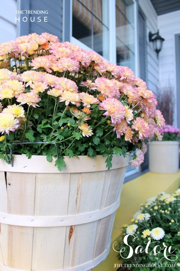 Whitewashed Barrel Planter with Pretty Blossoms